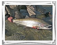 Steelhead Fishing in BC