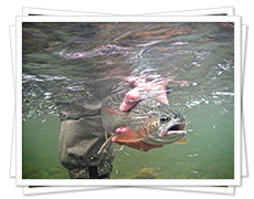Trout Fishing in BC