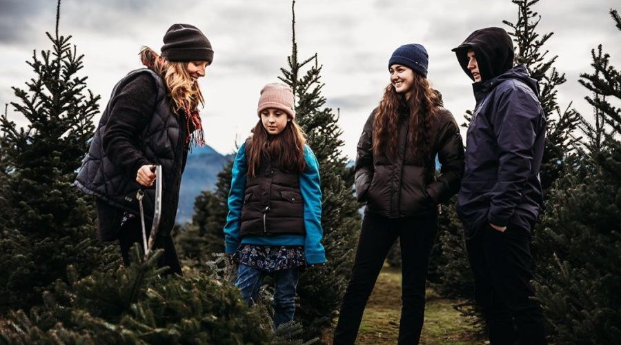 WHERE TO FIND YOUR CHRISTMAS TREE IN CHILLIWACK