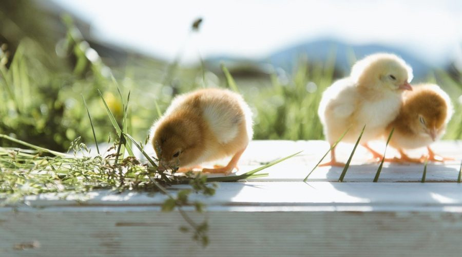 HOPPING INTO EASTER – Tourism Chilliwack