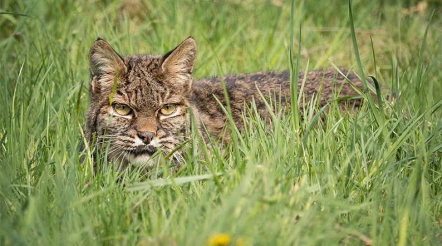PROTECTING THIS GIFT – WILDLIFE SAFETY